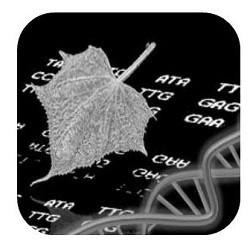 Cherry Leafroll Virus RNA PCR