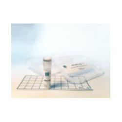 AMCV HYB (Artichoke Mottled Crinkle Virus)