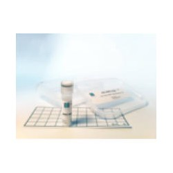 TuMV HYB (Turnip Mosaic Virus)